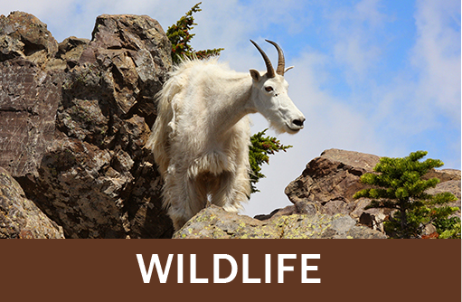 Click for wildlife and animal resources