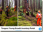 Tongass Young Growth Story Map screenshot.