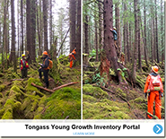Tongass Young Growth Portal Story Map