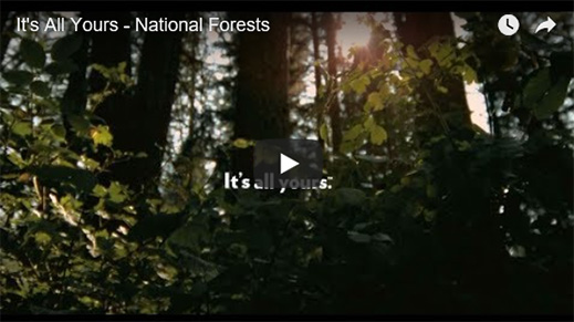 Screenshot of the video looking into the green leaves of the tall trees.