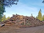 A pile of trees and debris stacked up near a Forest Service road.