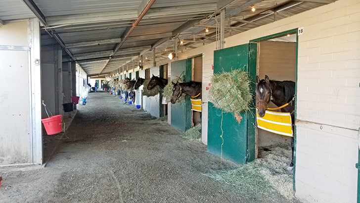 Racehorses peek through their stable doors during the Lilac Fire that came close to the fairgrounds.