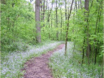 Trail with Wildflowers