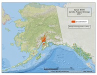 Spruce beetle damage mapped Alaska-wide during aerial detection survey in 2017