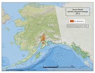 Spruce beetle damage mapped Alaska-wide during aerial detection survey in 2016