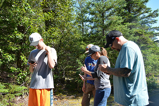 Four teenagers looking at their phones in the middle of a forest.