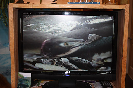 A photo of a TV screen showing the live video feed of a salmon camera.