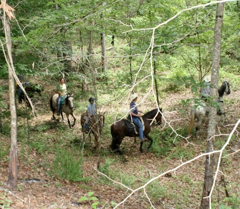 Photo of people riding horses on a trail in the Kisatchie National Forest