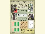 Poster with photos showing SPLAT application on whitebark pine trees.