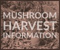 Click here to find Mushroom Harvest information for the Northern Region in 2018