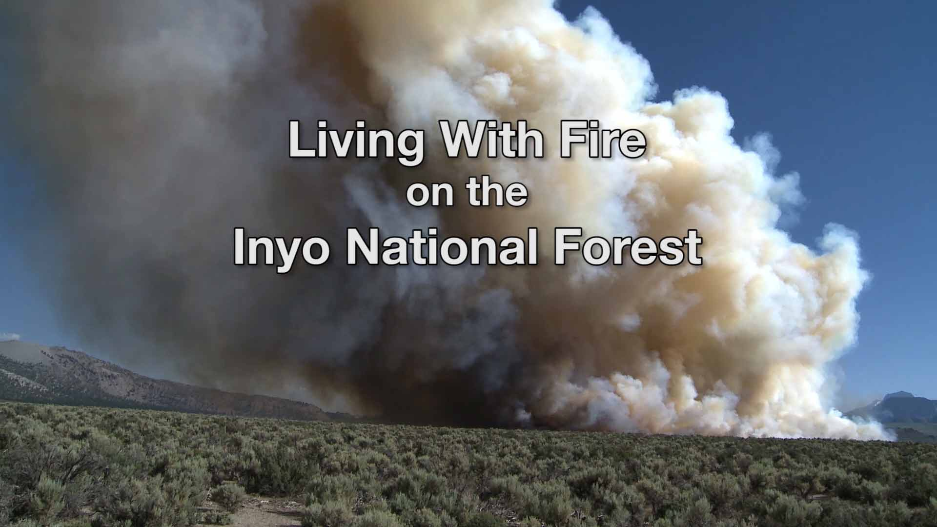 Fire producing smoke in a forest setting.