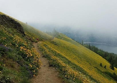 Dog Mountain trail is highlighted by spring-blooming yellow balsamroot flowers