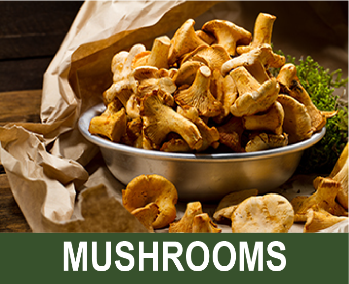 Click for info on mushroom harvesting