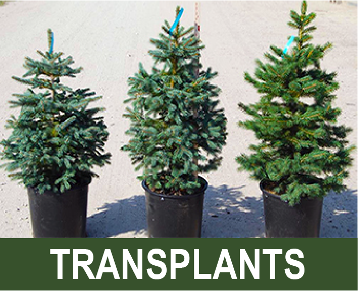Click for info on live plants and transplants collecting