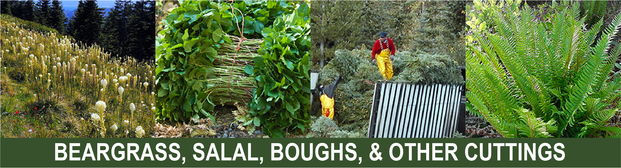 Click for info on Beargrass, salal, boughs, ferns, & cuttings