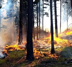 Prescribed fire in forest