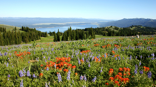 Photo of wildflowers within Cascade District