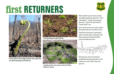 Screenshot of fire ecology flier showing first returners