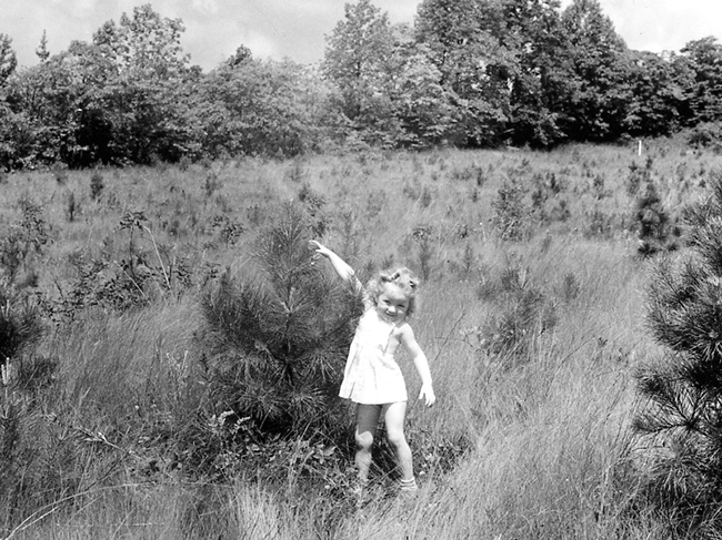 A little girl stands in the middle of a field and small pines stretching to reach the top of a tree.