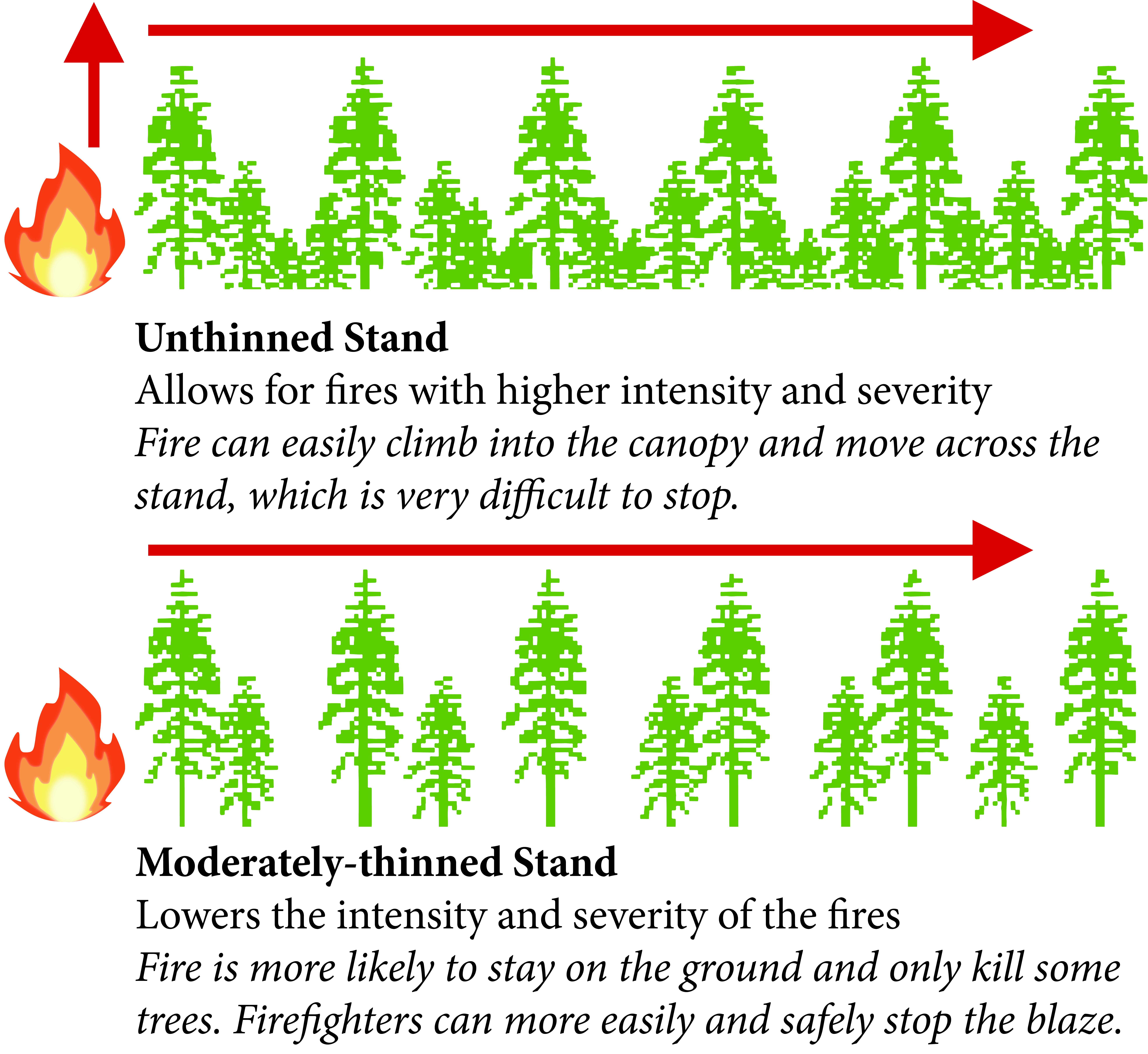 A graphic showing the benefits of forest thining