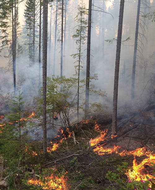 A prescribed burn in the forest