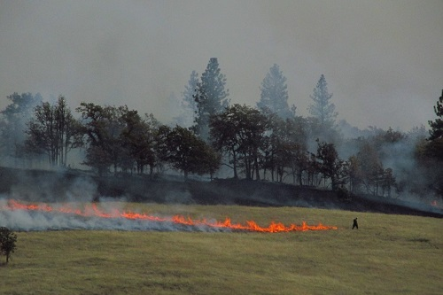 A fire burns a grass field near the tree line