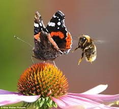 Bee and butterfly on a flower