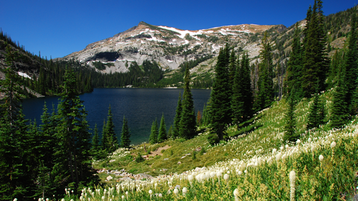 Bass Lake and field of Beargrass