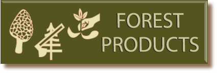 Click here to find out more about collecting forest products like mushrooms, berries, and more!