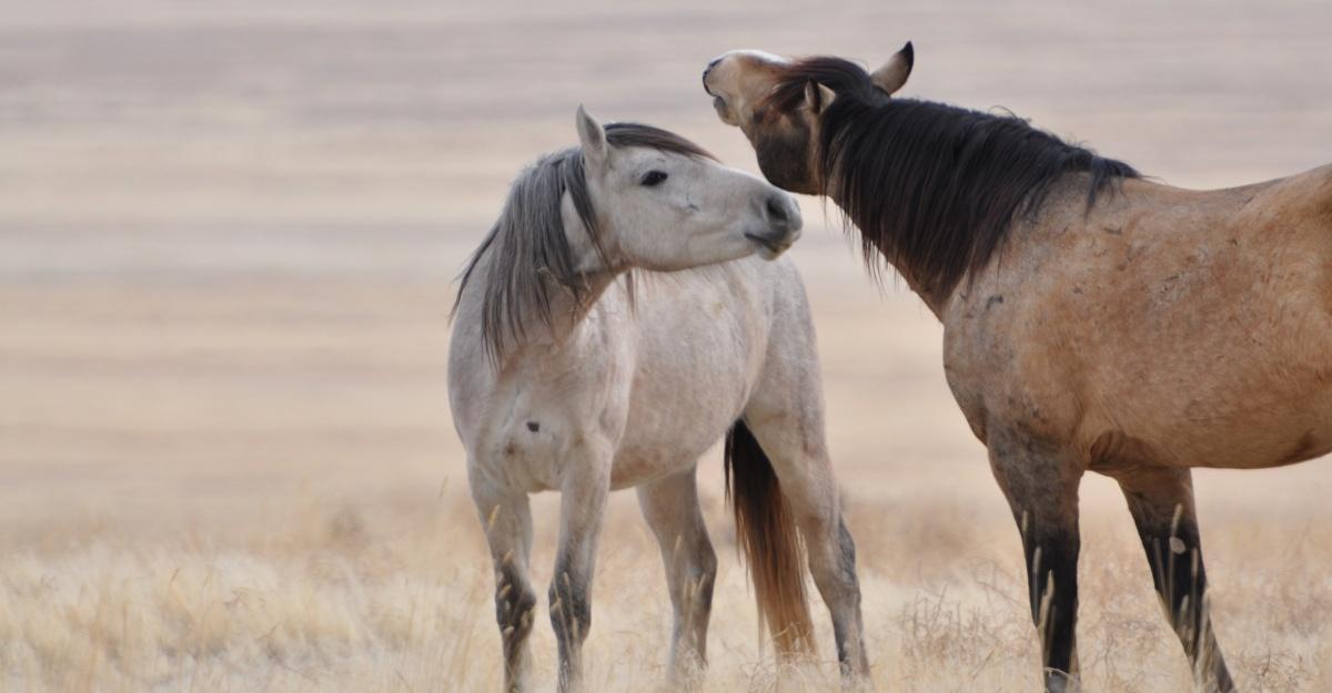 Wild Horse Adoption Program