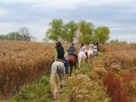 Four people ride horses along a trail through open grasslands on Finger Lakes National Forest.