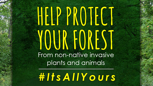 Help protect your forest from non-native invasive species.