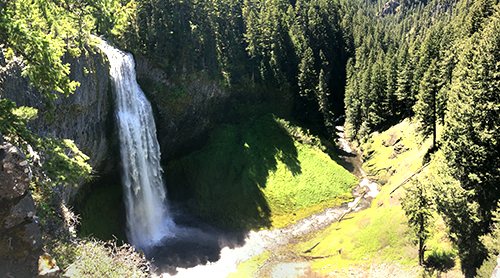 Salt creek falls tumbles over the cliff surrounded by forest