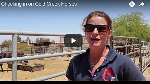 Screenshot of a portion of a video where a female is talking about the horses in the corrals behind her.