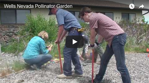 People working in a an area preparing for a pollinator garden. Click to listen to the video.