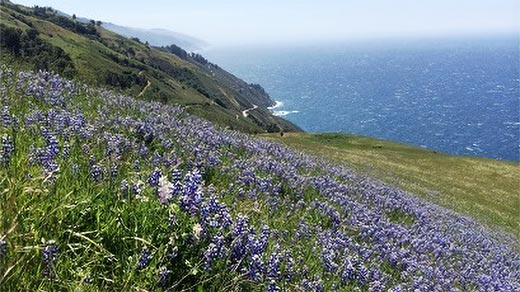 View of ocean coast with wild flowers on the side of cliffs.