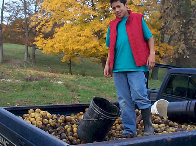 A man stands a top a truck bed full of walnuts.