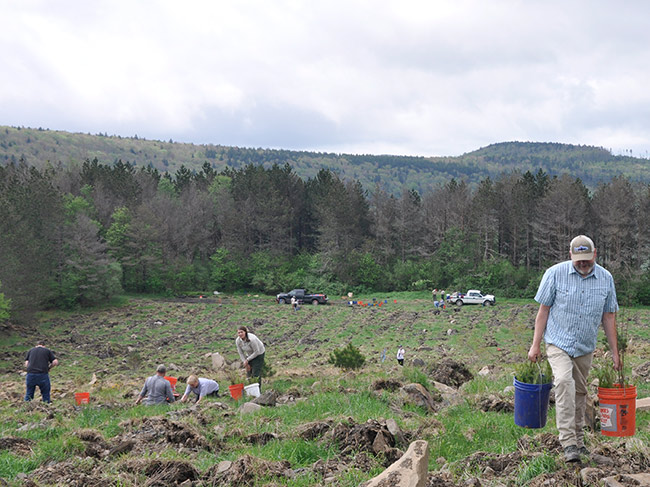 Volunteers work to plant trees across an open tract of tilled soiled among the mountain forest.