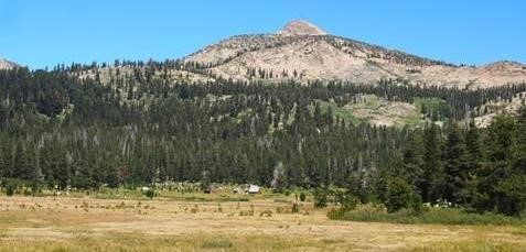Image of forest and meadow.