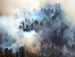 Tinder fire: smokey tree crowns