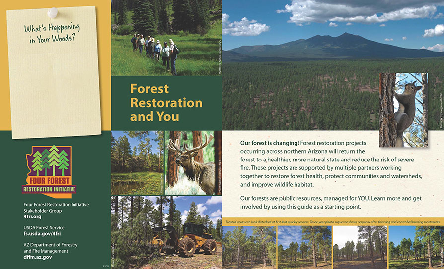 Forest Restoration and You brochure