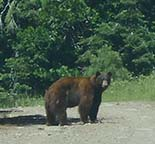 Black Bear Walker Mine