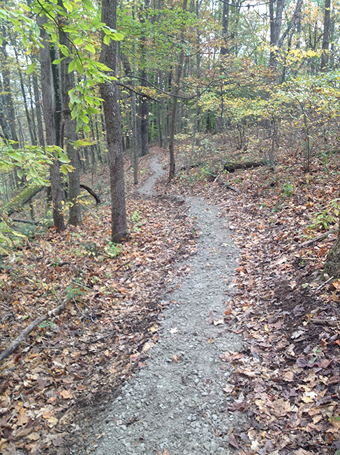 A gravel trail winds up a steep hill lined with trees.