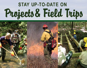 Forest Projects Email List & Guided Fieldtrips