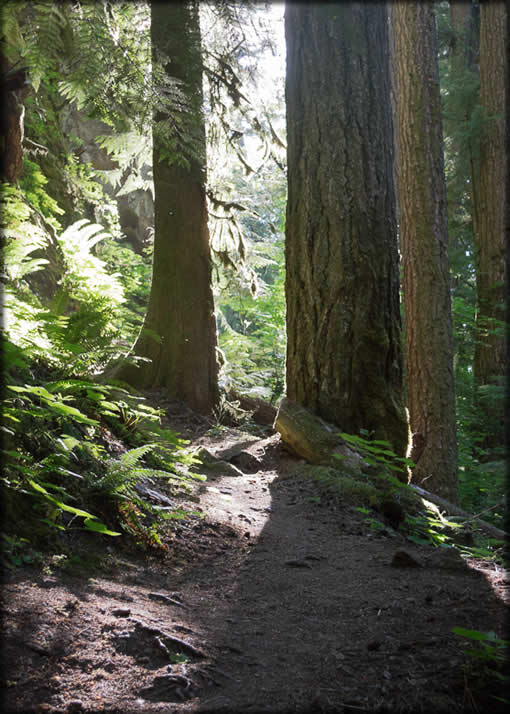 Yakso Falls Trail #1519 - Typical trail