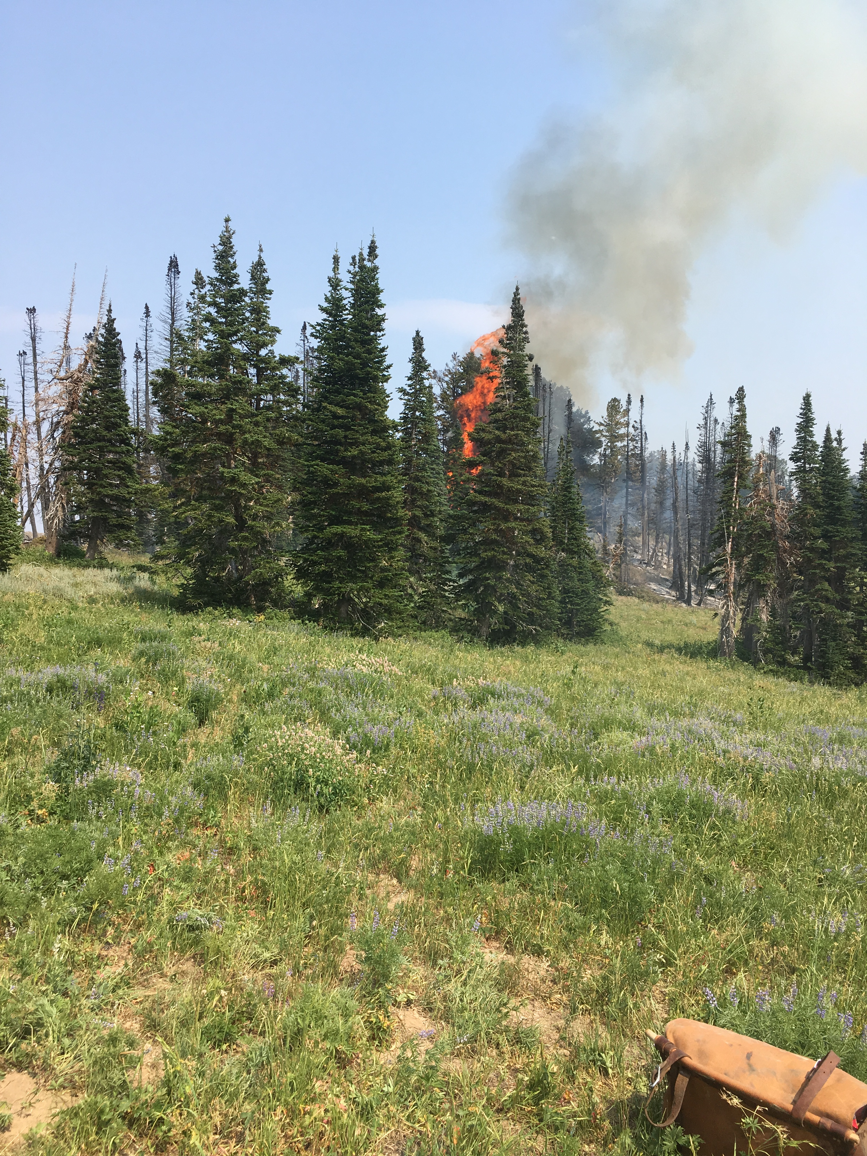 Photo of the Jardine fire located in the Mt. Naomi Wilderness fire on the Logan Ranger District