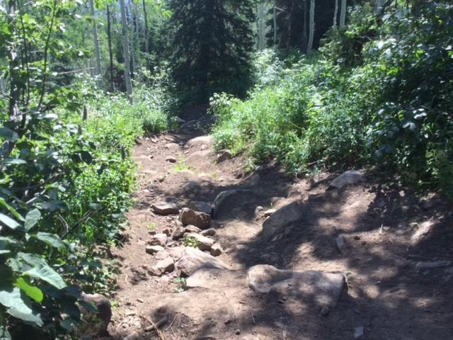 Photo of the Taylors Fork ATV trail that will be worked on