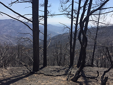 Burned area emergency response begins on Ranch Fire