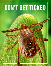 A close up of a tick says Don't Get Ticked.