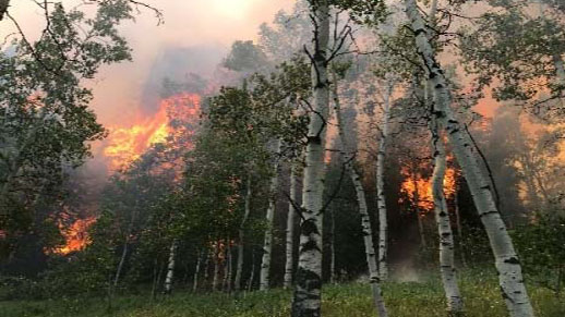 Fire moving through aspen trees. Click to read the article.